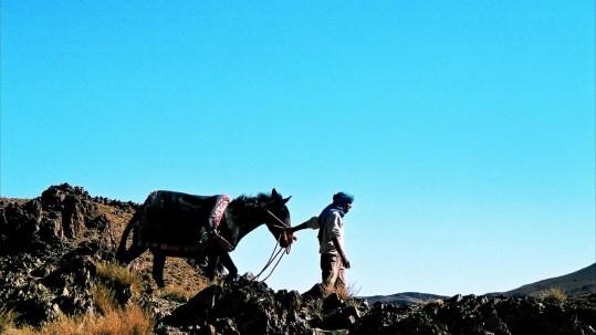 Jebel Sirwa. Mule capricieuse