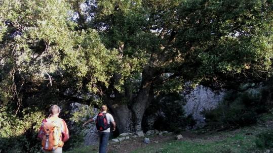 Rencontre avec un chêne majestueux