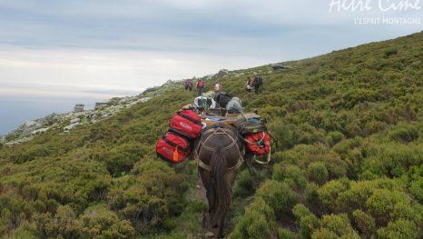 Randonnée cap Corse - La caravane de mules